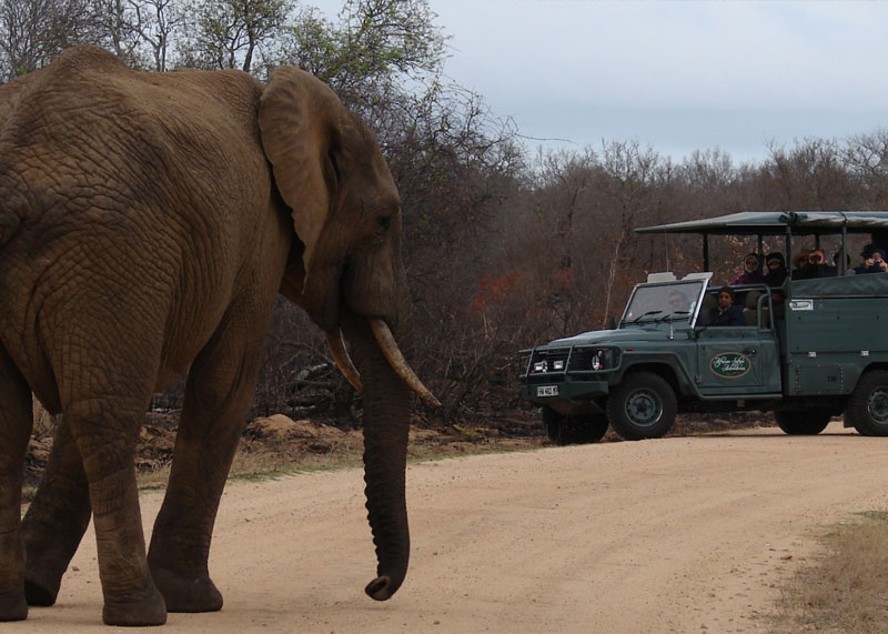 African Safari Adventures