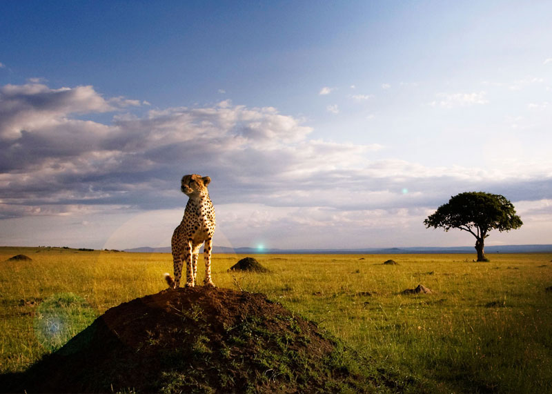 African Savanna Travel