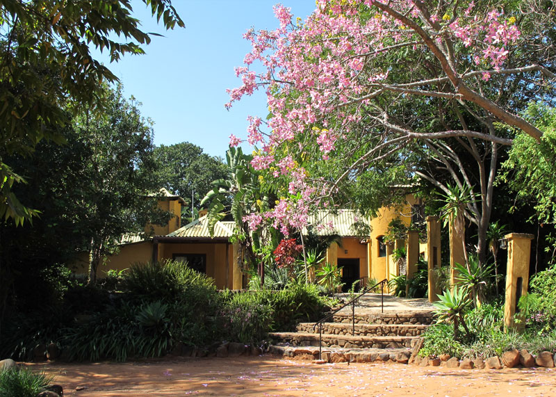 Gecko Lodge