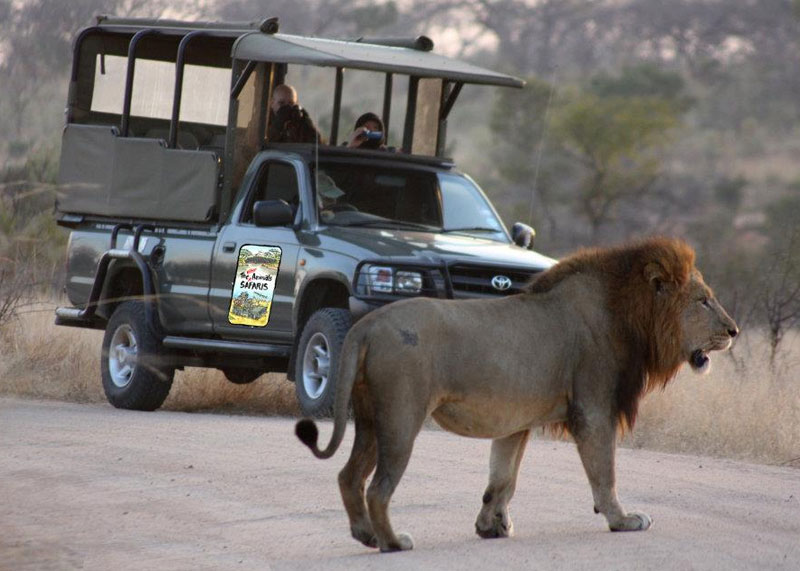 The Other Animals Safaris