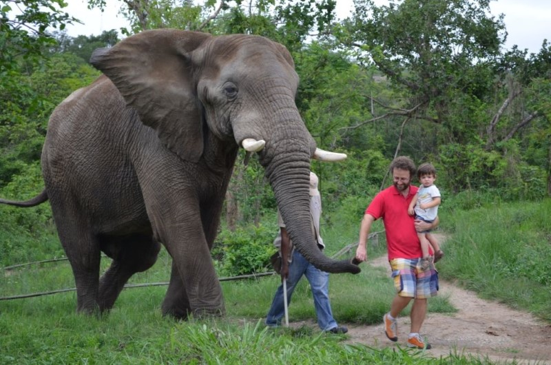 Elephant Sanctuary Hazyview